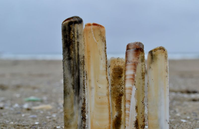 Close-up of wooden post on beach