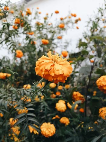 Nature Growth Beauty In Nature Orange Color Flower Outdoors Close-up Fragility Day No People Plant Tree Freshness Flower Head