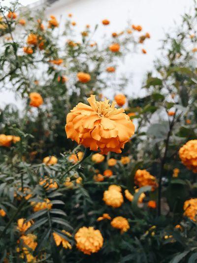 Close-up of orange flowers blooming on tree