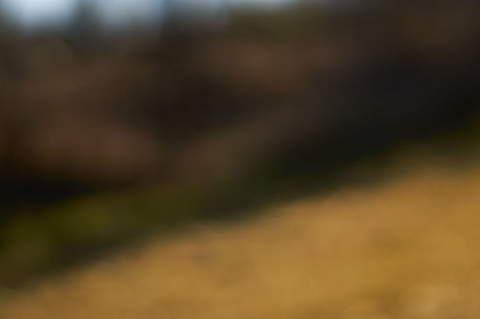 Blur Backgrounds Beautiful Blur Blur Blur Day Blur Effect Blur Effects Close-up Day Nature No People Out Of Focus Out Of Focus 📷 Outdoors Without Focus