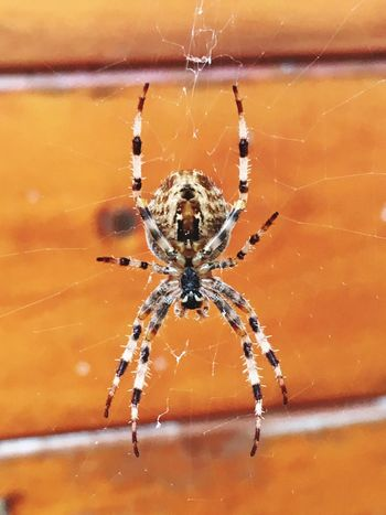 Maximum Closeness Spider Spider Web One Animal Spinning Animals In The Wild Close-up Web Animal Leg Focus On Foreground Animal Wildlife Nature Survival Arachnid Fragility No People Beauty In Nature Intricacy Insect Complexity