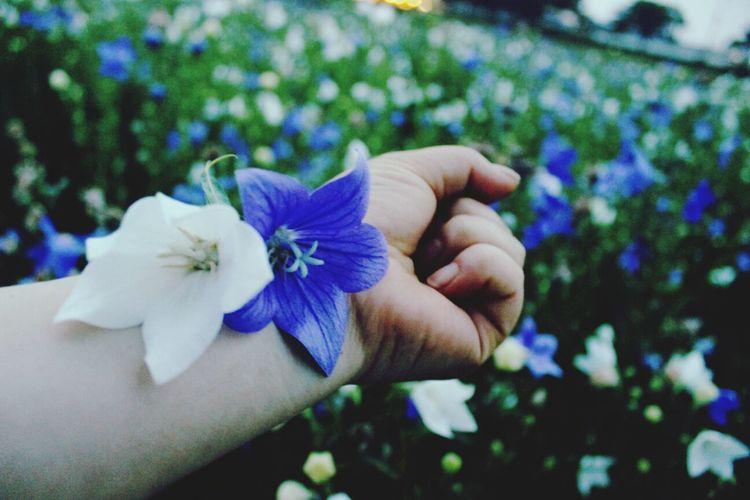 도라지꽃 꽃 경주 손