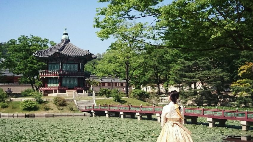 Tree Architecture Day Outdoors Women Real People Travel Destinations Standing Ceremony Men People Adults Only Adult Full Length Young Adult Young Women One Person Flower Green Color Uniqueness Seoul Korea Summer Sky Nature
