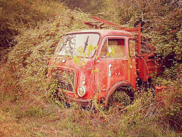 Abandoned Briers Damaged Day Land Vehicle Mode Of Transport Nature No People Old Outdoors Red Stationary Thorns Transportation Tree Truck Van