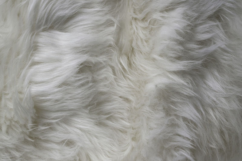 white fur texture Artificial Background Background Texture Beige Clean Close-up Closeup Fabric Fur Furry Hair Hairy  Material Materials No People Pattern Soft Softness Textile Texture Warm White