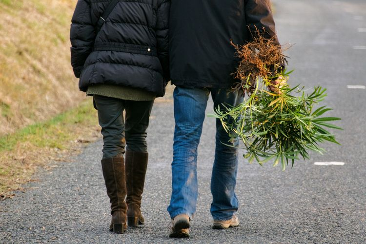 Low section of man holding plants while walking with woman on road during winter