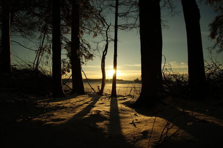 Tree Shadow Sunset Silhouette Sunlight Nature Scenics No People