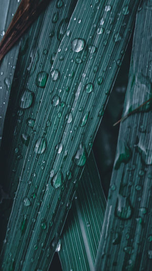 Full frame shot of wet leaves during rainy season