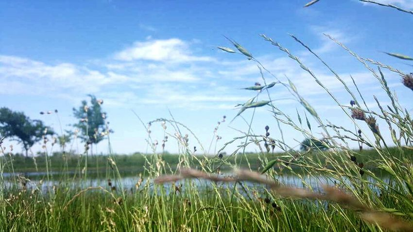 Eye4photography  Nature_collection Amaturephotography Texaslife Texas Landscape Eyem Nature Lovers  Trees And Sky Pond Life Nature Photography Pond Water Bluewater Green Grass And Trees Green Grass Blue Sky Blue Sky Beautiful Nature Besutiful Day Beautiful Texascountry Pasture Water Water_collection Texas Sky Tall Grass Blowing In The Wind Water Reflections Showcase July