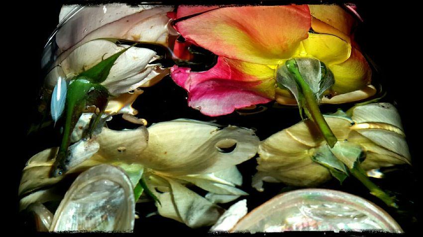 Roses Flower Vase Water Bouquet In A Bottle