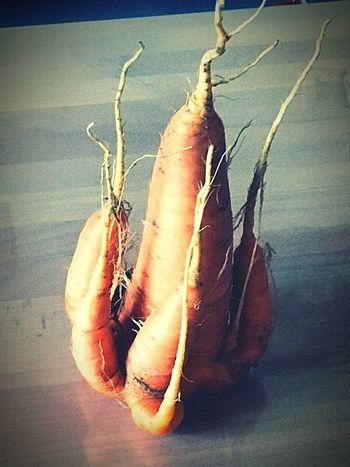 Last Veggi this Sommer Veggi Möhre Healthy Eating Gemüse Human Hand Low Section Close-up