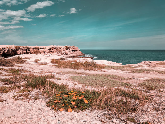 light cliffs, dark sky Turquoise Colored Dark Sky Spring Flowers Daisies Arid Climate Arid Landscape Sea Water Beach Sand Sky Horizon Over Water Landscape Cliff Seascape Geology Coastal Feature Headland Stack Rock Ocean Coast Coastline Rock Formation Rocky Coastline Wave