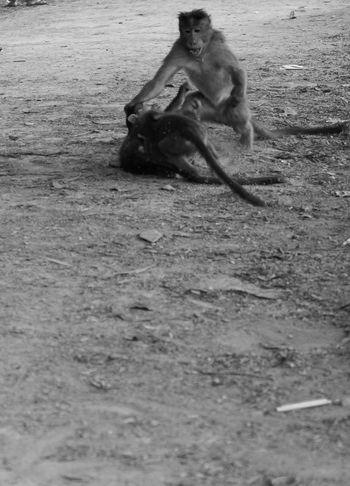 Live For The Story Monkey Love Monkeybusiness  Monkeys Rule Monkey Bangalore