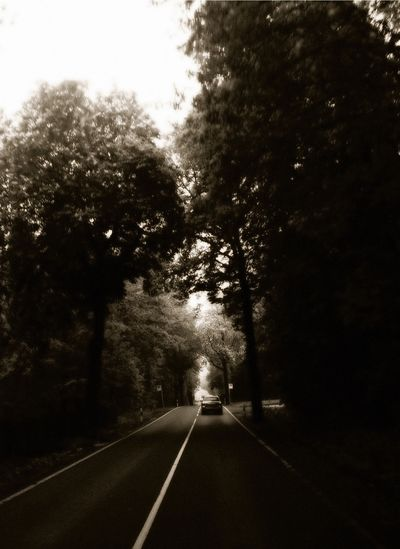 Empty road along trees