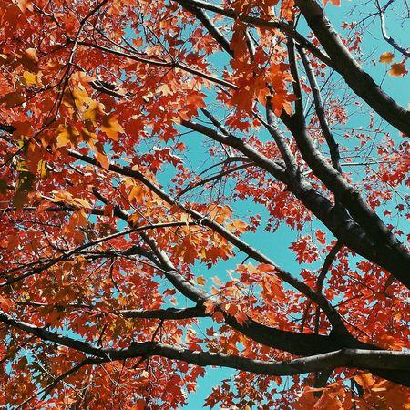 Trees Leaves Autumn Autumn Leaves