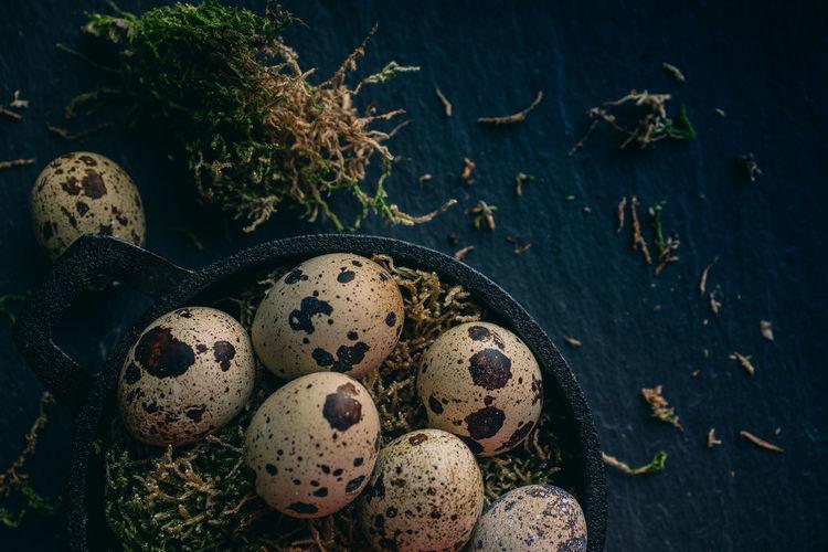 High angle view of quail eggs