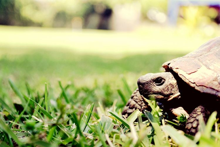 Test test ^^ EyeEm Nature Lover Nature Photography Animal Tortue