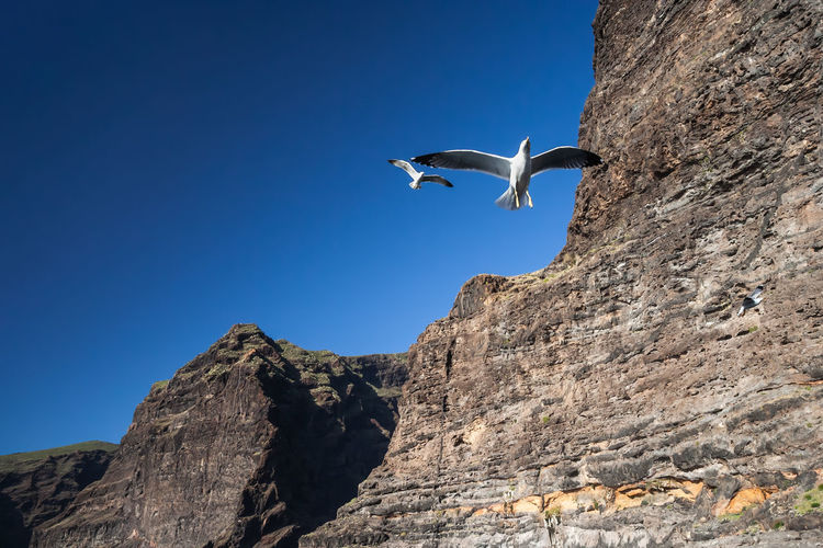 Low angle view of seagull flying over rock