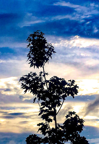 Urban tree Beauty In Nature Cloud - Sky Growth Leaf Nature Nightfall Outdoors Plant Plant Part Scenics - Nature Silhouette Sky Sunlight Sunset Tranquil Scene Tranquility Tree