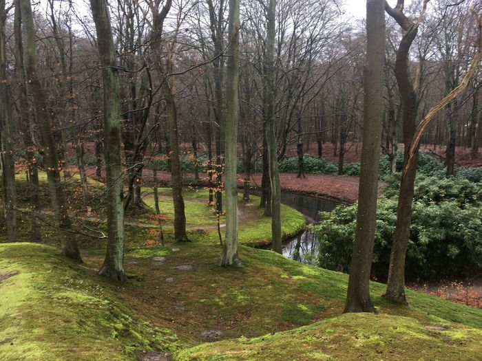 Nature Moss &