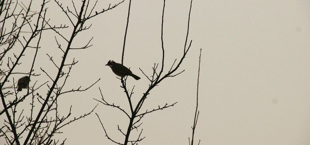 China Beauty Winter View Birds On Branches Snow Day ❄