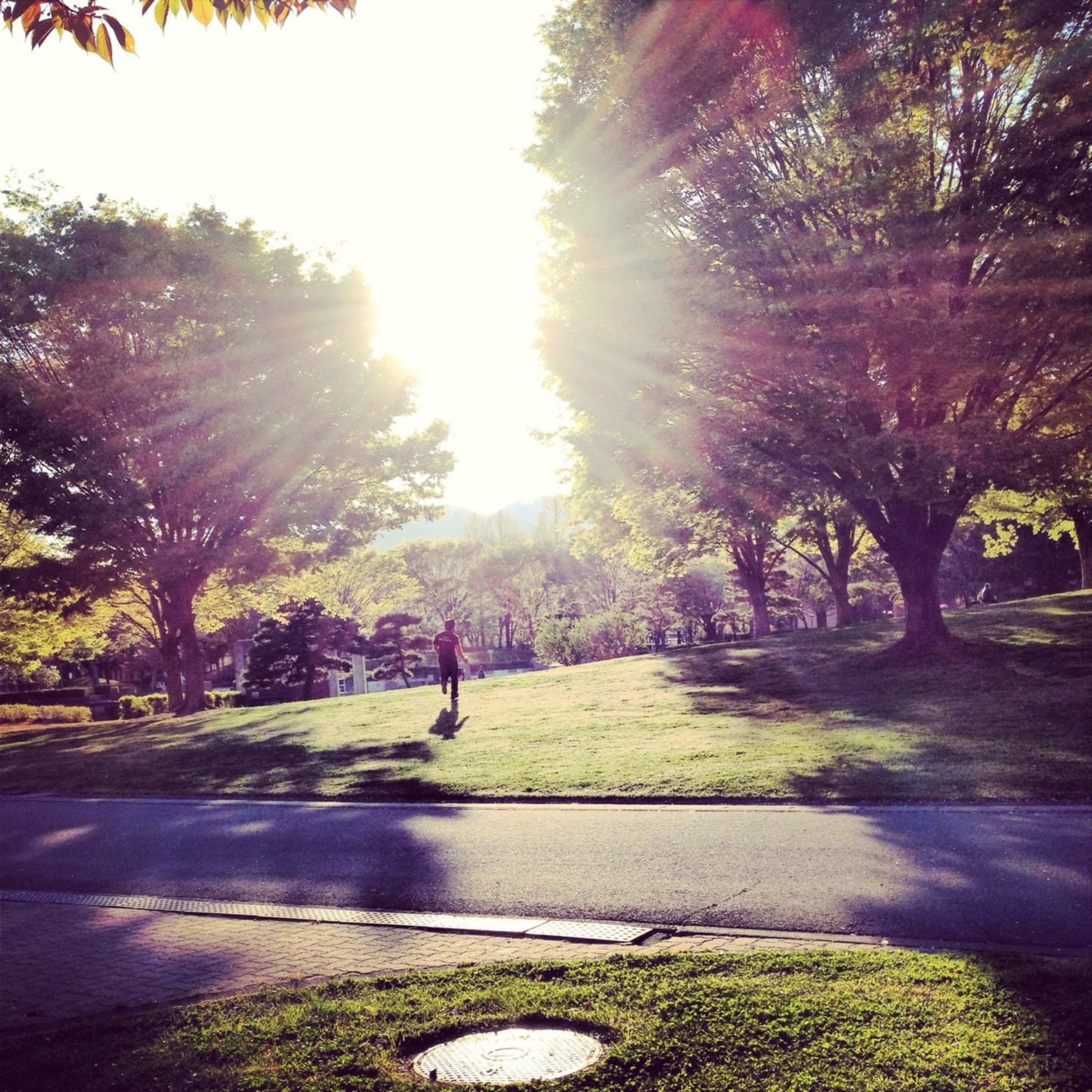 tree, sunlight, sun, shadow, sunbeam, road, park - man made space, lens flare, street, transportation, sunny, growth, footpath, the way forward, grass, lifestyles, day, nature, leisure activity