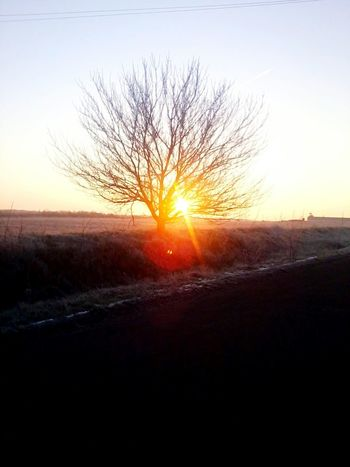 Morning Dawn Clear Sky Sun Tranquility Bare Tree Landscape