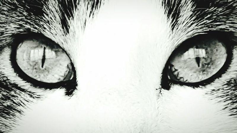 My cat One Animal Iris - Eye Animal Eye Eyeball Catlovers Cats Of EyeEm