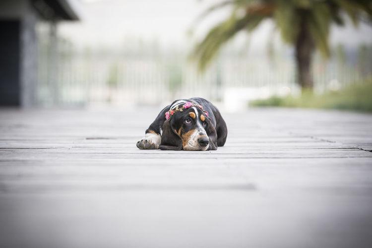 Ammie Cute Pets Dogs Dogs Of EyeEm EyeEm Ready   Puppy Love Cute Dog  Dog Portrait Puppy
