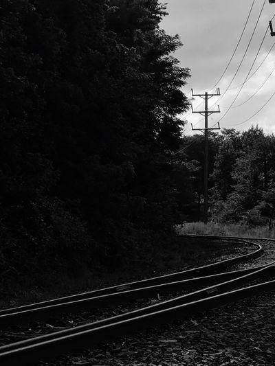 Rail Transportation Railroad Track Track Transportation Tree Plant Sky
