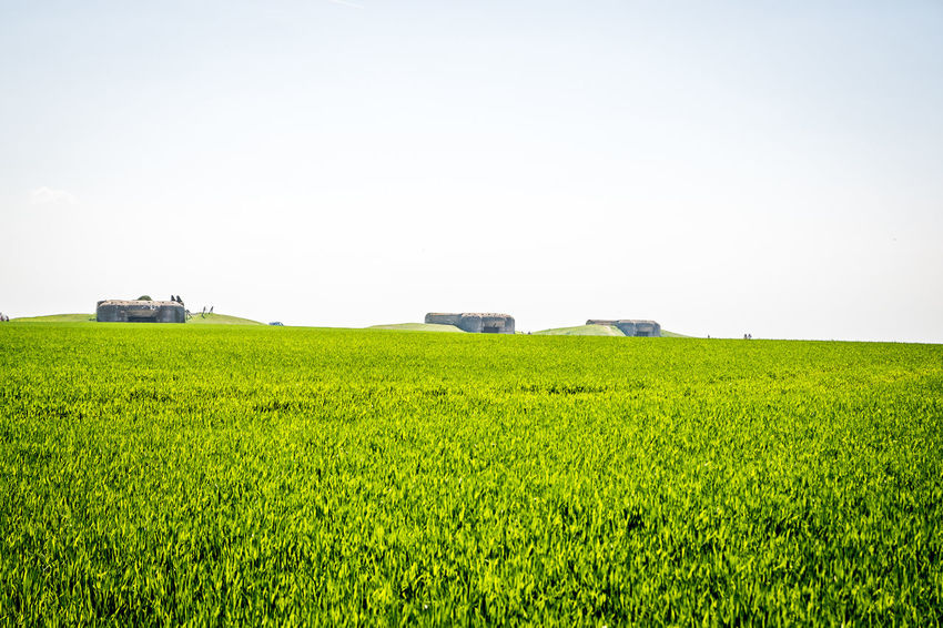 Agriculture Beauty In Nature Cereal Plant Copy Space Crop  Day Environment Farm Field Grass Green Color Growth Land Landscape Nature No People Outdoors Plant Rural Scene Scenics - Nature Sky