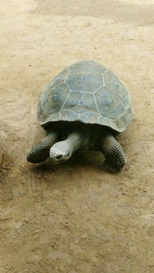 Zoo Rostock Landschildkröte Animal Wildlife Turtle Nature