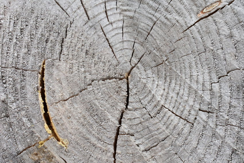 Beautiful Nature Tree Trunk Backgrounds Bark Beauty In Nature Brown Close-up Concentric Cracked Cute Cuted Tree Day Forest Full Frame Grain Grey Macro Nature No People Outdoors Pattern Plant Rings Rough Structure Textured  Tree Tree Ring Tree Stump Tree Trunk Trunk Wood - Material