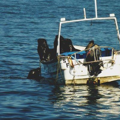 """los lobos marinos carreteando en los botes artesanales, sólo se seguían subiendo y era como: """"¡Agárrame hermano hueón! ¡Eh, eh, eh!"""" ;-;"""