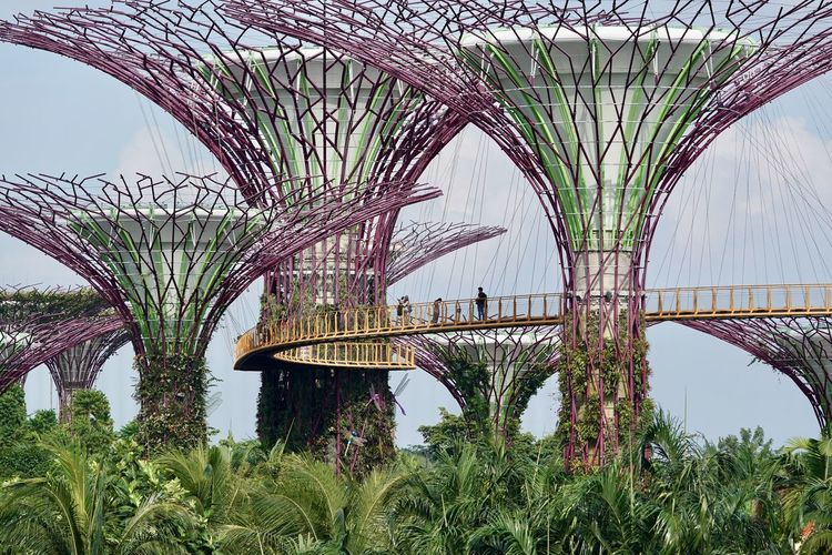 Avatar Arch Arch Bridge Arched Architecture Botanical Garden Bridge Bridge - Man Made Structure Built Structure Connection Day Engineering Grass Growth Nature Outdoors People Plant Rail Transportation Sky Tower Transportation Travel Tree The Great Outdoors - 2018 EyeEm Awards The Traveler - 2018 EyeEm Awards The Architect - 2018 EyeEm Awards The Street Photographer - 2018 EyeEm Awards