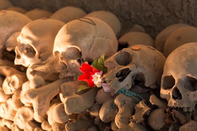 Bone  Cemetery Flower Flowering Plant Grave History Human Bone Human Skeleton Human Skull Indoors  Large Group Of Objects Religion Representation Skeleton Skull Spirituality Spooky The Past