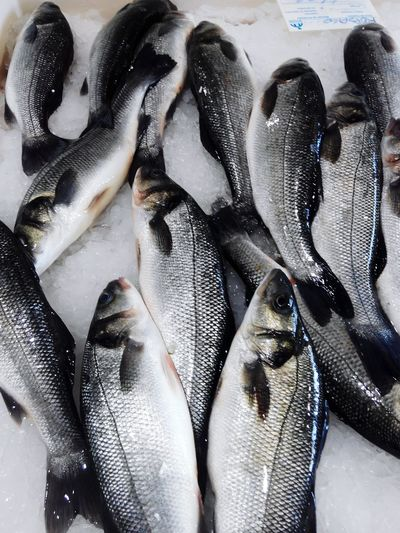 Close-up of fishes for sale at market