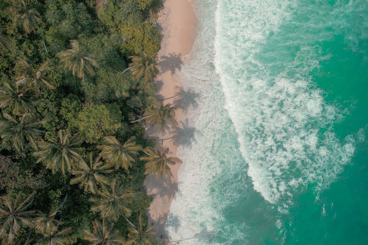 Aerial view of palm trees at beach