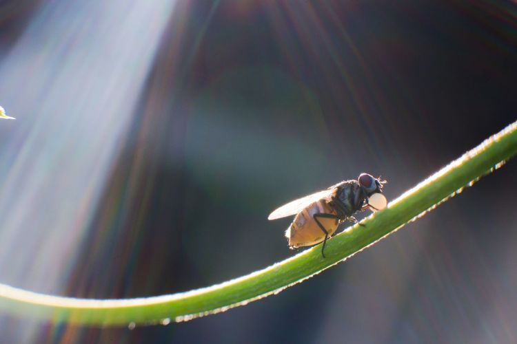 Close-up of fly perching on plant