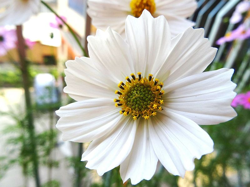 White Flower Amaturephotography Canon Eos 1200d Macro Photography