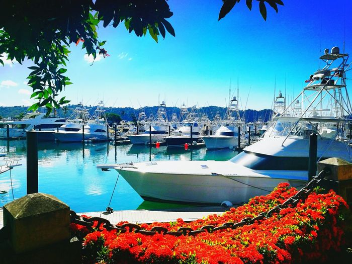 Water Travel Vacations Yates! ! Nautical Vessel Tranquility Sunlight Tropical Climate Day