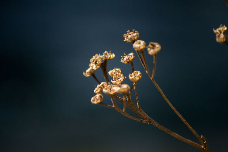 Close-up of wilted plants