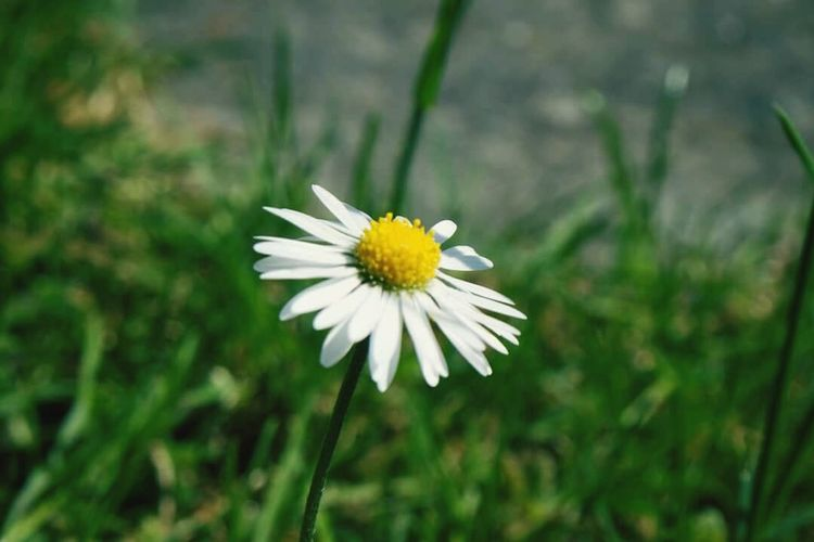 Flower Daisy Flower Love Daisy Yellow WithE