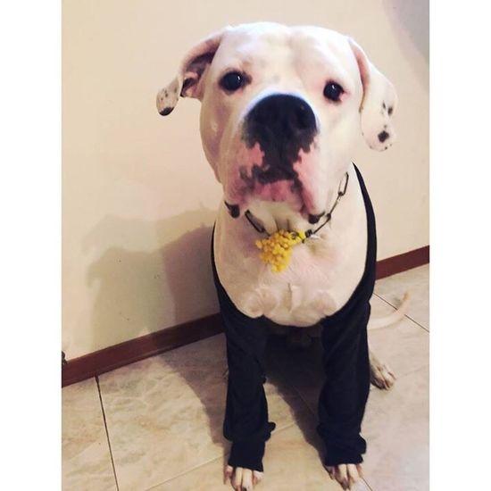 Fiel Elegant Selfie Selfie ✌ Picoftheday Pic Beautiful Dogo Dog Dogo Argentino Friend Friendship Friends ❤