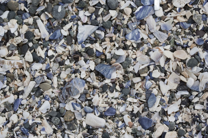 Shells and Pebbles in a Tide Pool at Low Tide - Long Beach, Pacific Rim National Park, Vancouver Island, British Columbia, Canada Abundance Arthropod Background Backgrounds Beach Blue And White Close-up Crustacean Full Frame Marine Life Mussel Natural Pattern Nature No People Oceanographic Outdoors Pattern Pebble Pebble Beach Pebbles Sea Life Shell Shells Tidal Basin Tidal Pool