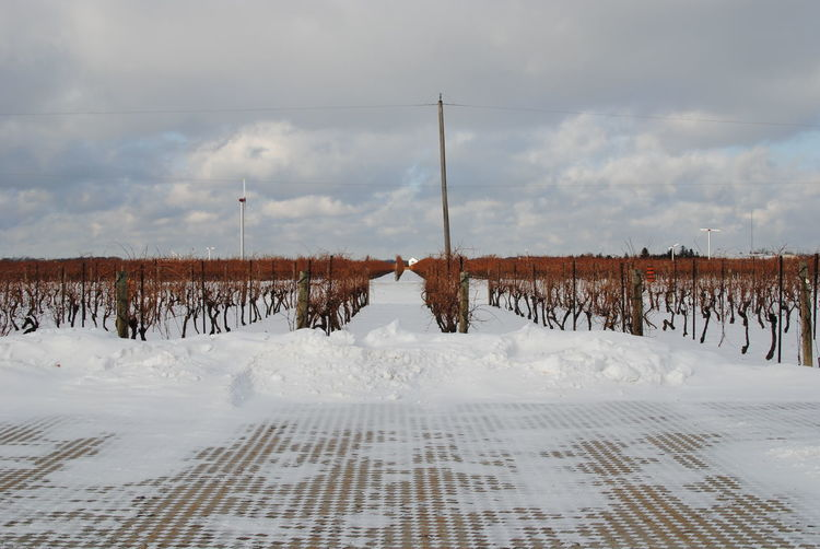 Snow Winter Cold Temperature Sky Cloud - Sky White Color Nature Covering Tranquility Day No People Tranquil Scene Field Beauty In Nature Scenics - Nature Land Landscape Fence Boundary Snowcapped Mountain Vinyard Winery
