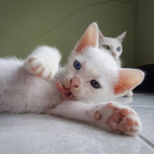 Close-up of kittens on floor