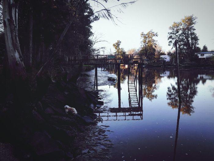 bajante Empty Bajante Rio Islas Del Delta Amanecer Sensei Río Espera Barro Tree Water Reflection Sky Calm Tranquil Scene Flood