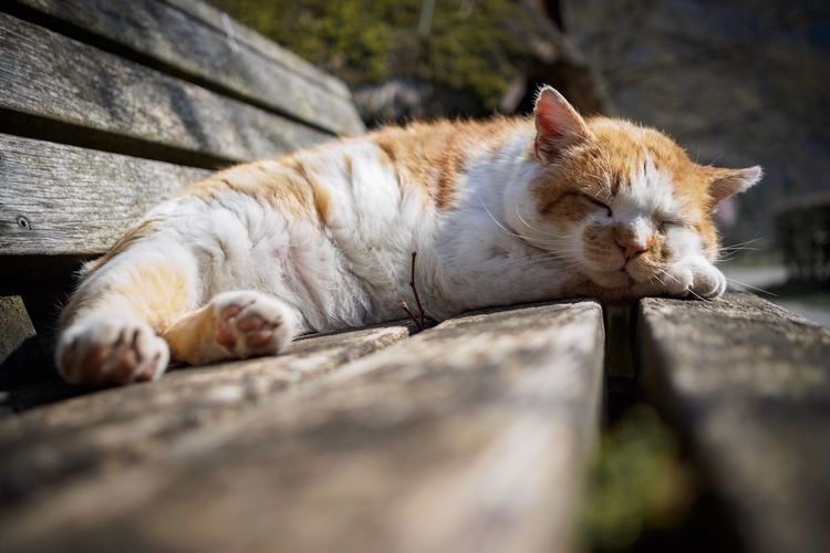Cat sleeping on wood