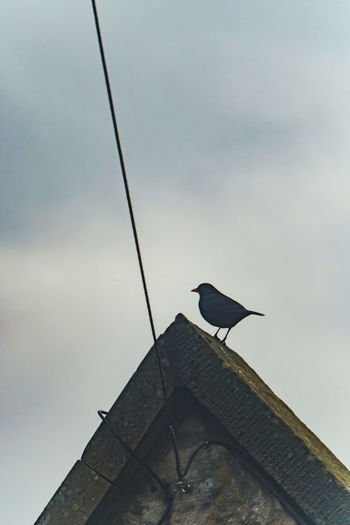 Low angle view of bird perching on roof against sky